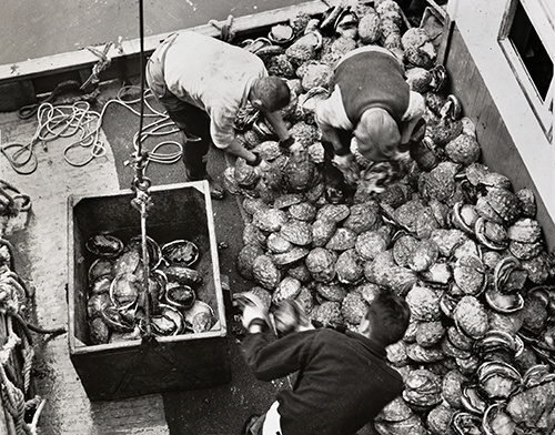 Abalone Industry